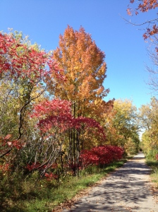 October walk along the Railway Trail, Lindsay, On.